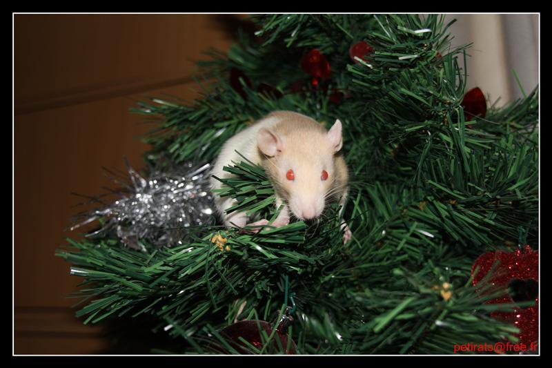 Parlons un peu de ratons! IMG_0104_GF