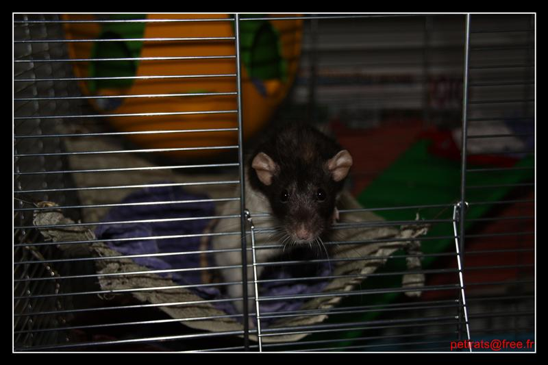 Parlons un peu de ratons! IMG_0112_GF_GF